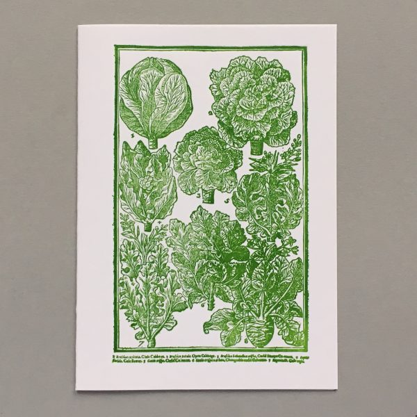 Cabbages, as lovely as roses